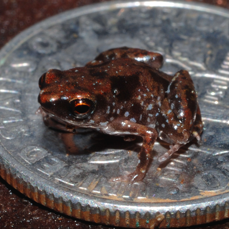 Curious Kids: What is the smallest animal ever?