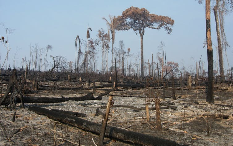 Aftermath of burning to clear forest