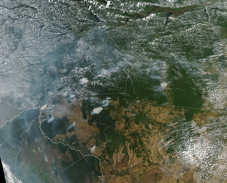 Incendios en el Amazonas: la tragedia de lo que no se
