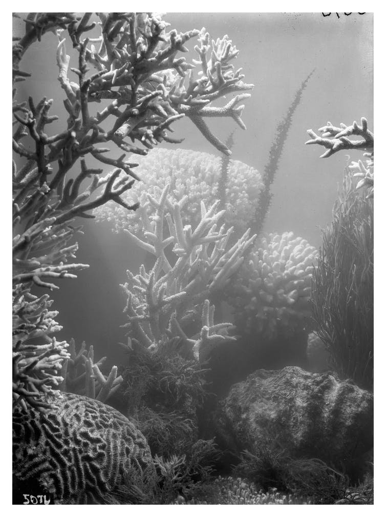 How pioneering photographer Frank Hurley came face to face with the future of the Great Barrier Reef in 1922