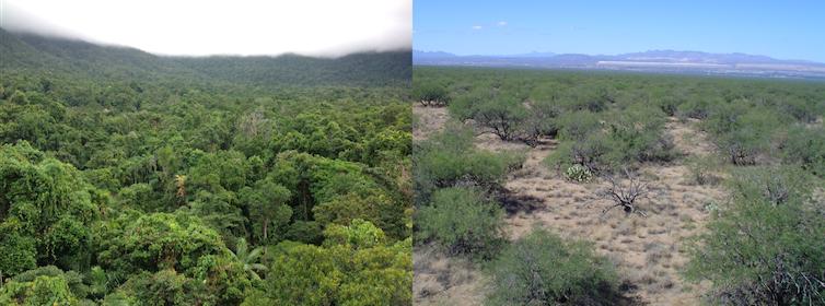 Por qué se recuperarán mucho antes los bosques canarios que los