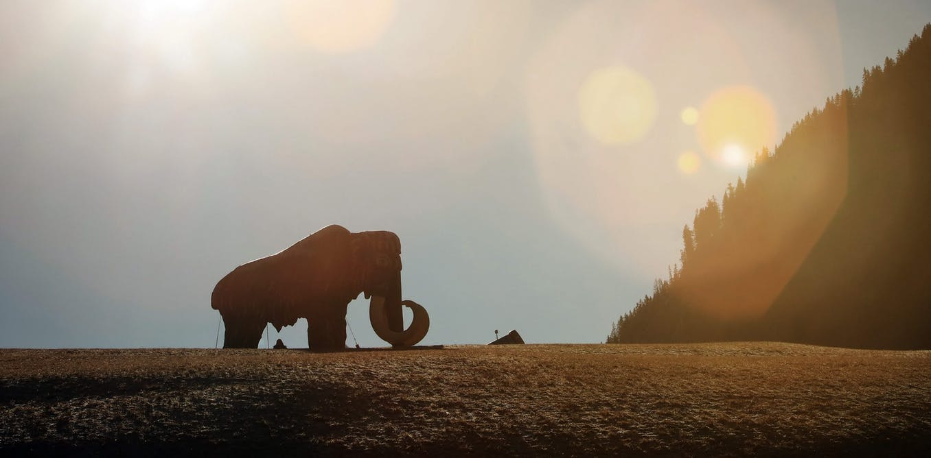 Why we need to protect the extinct woolly mammoth