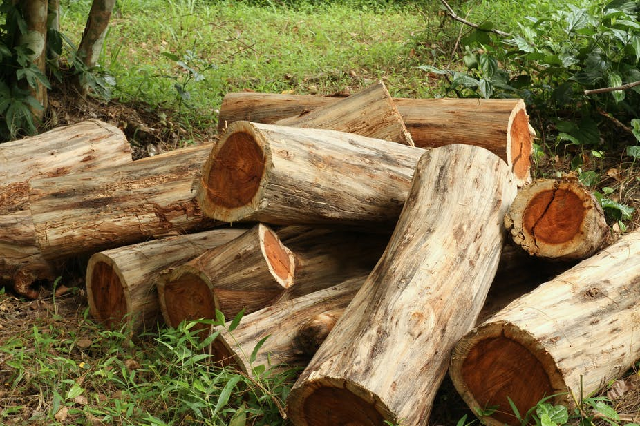 Africa's Mukula trees score a victory as trade is put under