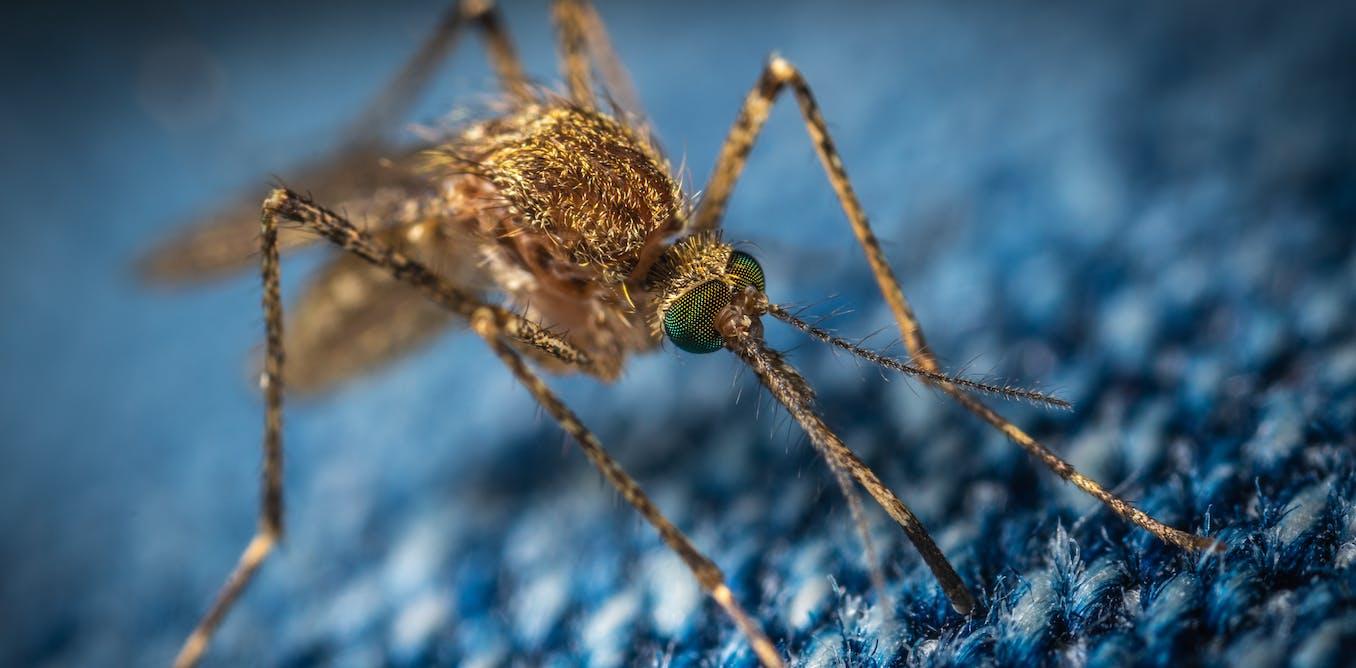Ces virus exotiques qui nous menacent