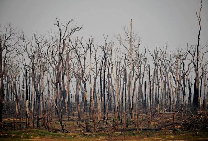Les forêts face au feu