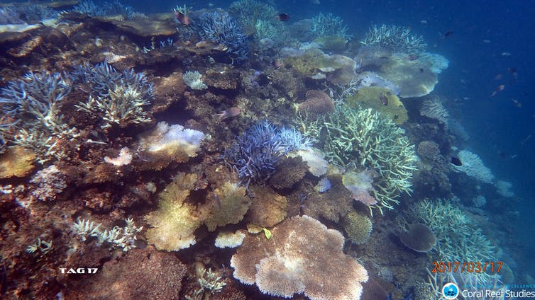 The Great Barrier Reef outlook is 'very poor'. We have one last chance to save it