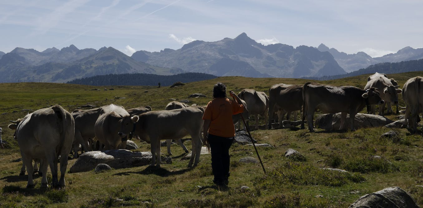 Taking back the hills: a tale of women rights and lands in the Catalan Pyrenees