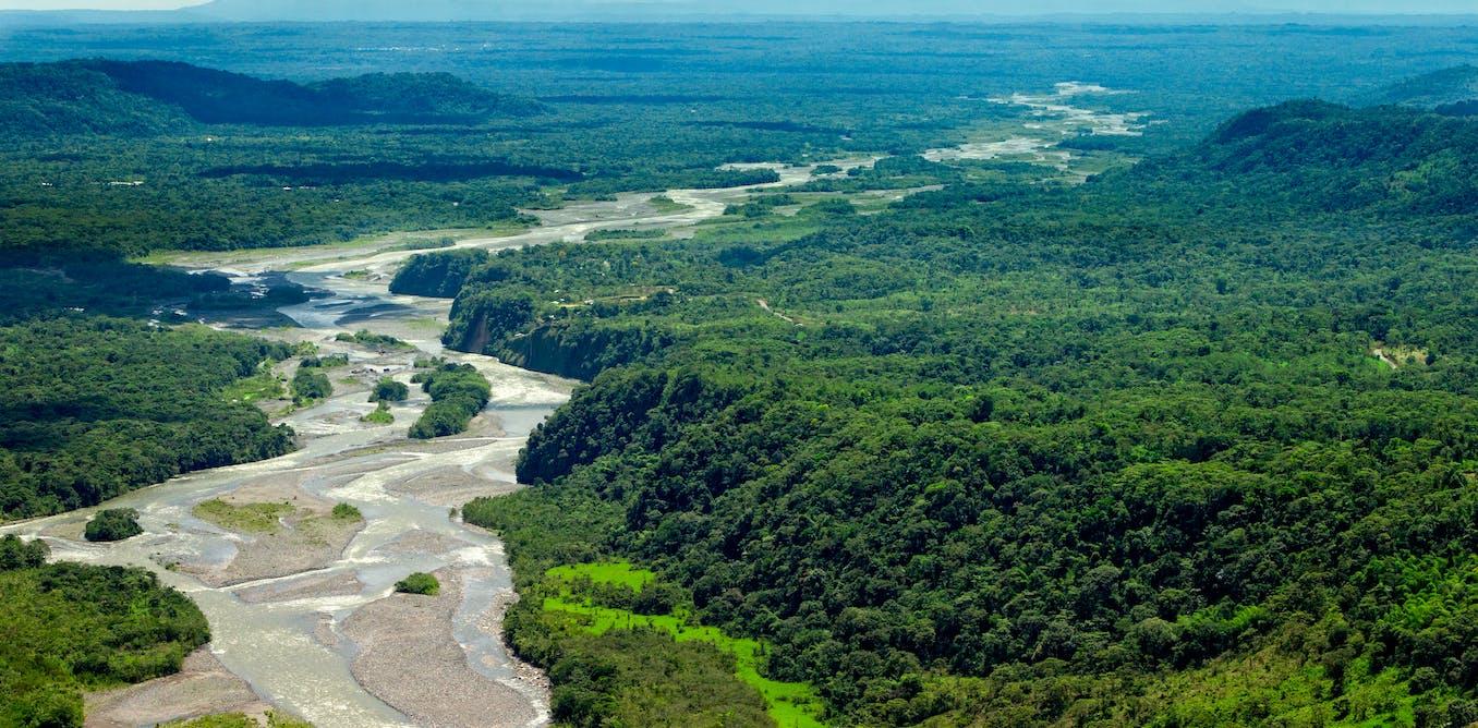 Por qué los bosques no son el pulmón del planeta