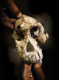 MRD: El cráneo que está cambiando lo que creíamos saber sobre la
