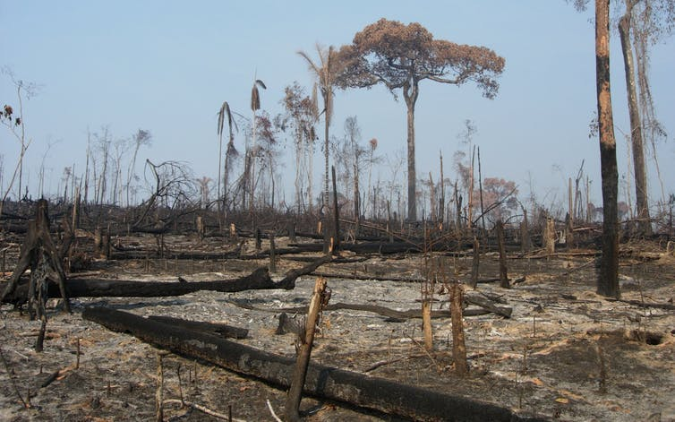Growing Up In Bad Neighborhoods Has A Devastating Impact Study >> Amazon Fires Deforestation Has A Devastating Heating Impact