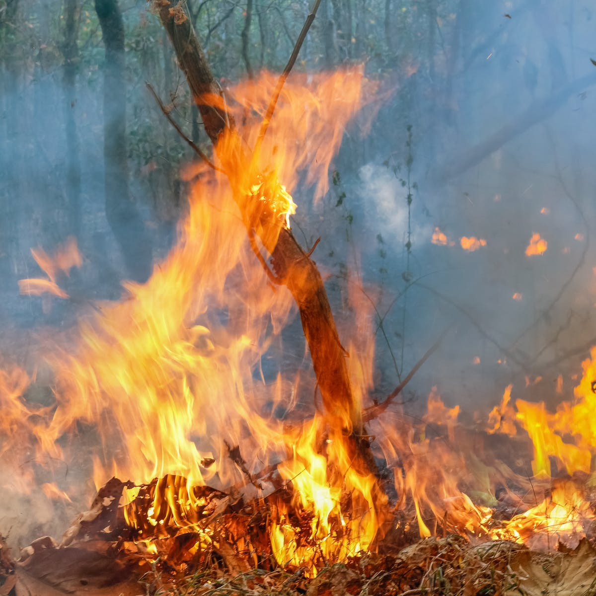 Amazon Fires What Will Happen If They Keep Burning