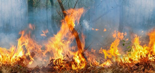This Christmas I Ll Burn It To The Ground.Amazon Fires What Will Happen If They Keep Burning
