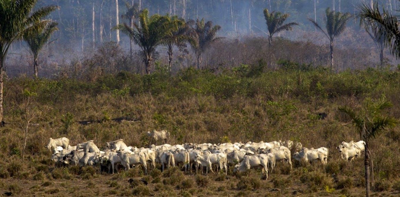Derrière les feux de forêt, le rôle clef des politiques agricoles