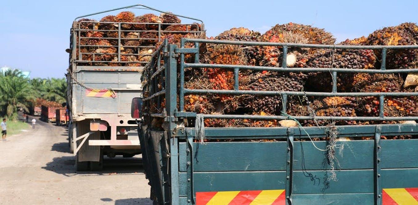 Ini mengapa perkebunan kelapa sawit bisa membuat masyarakat desa miskin