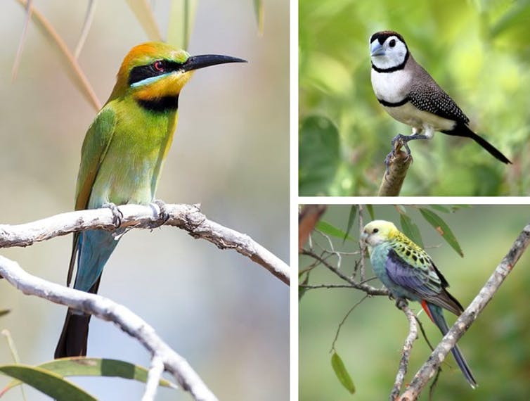 Most native bird species are losing their homes, even the ones you see every day