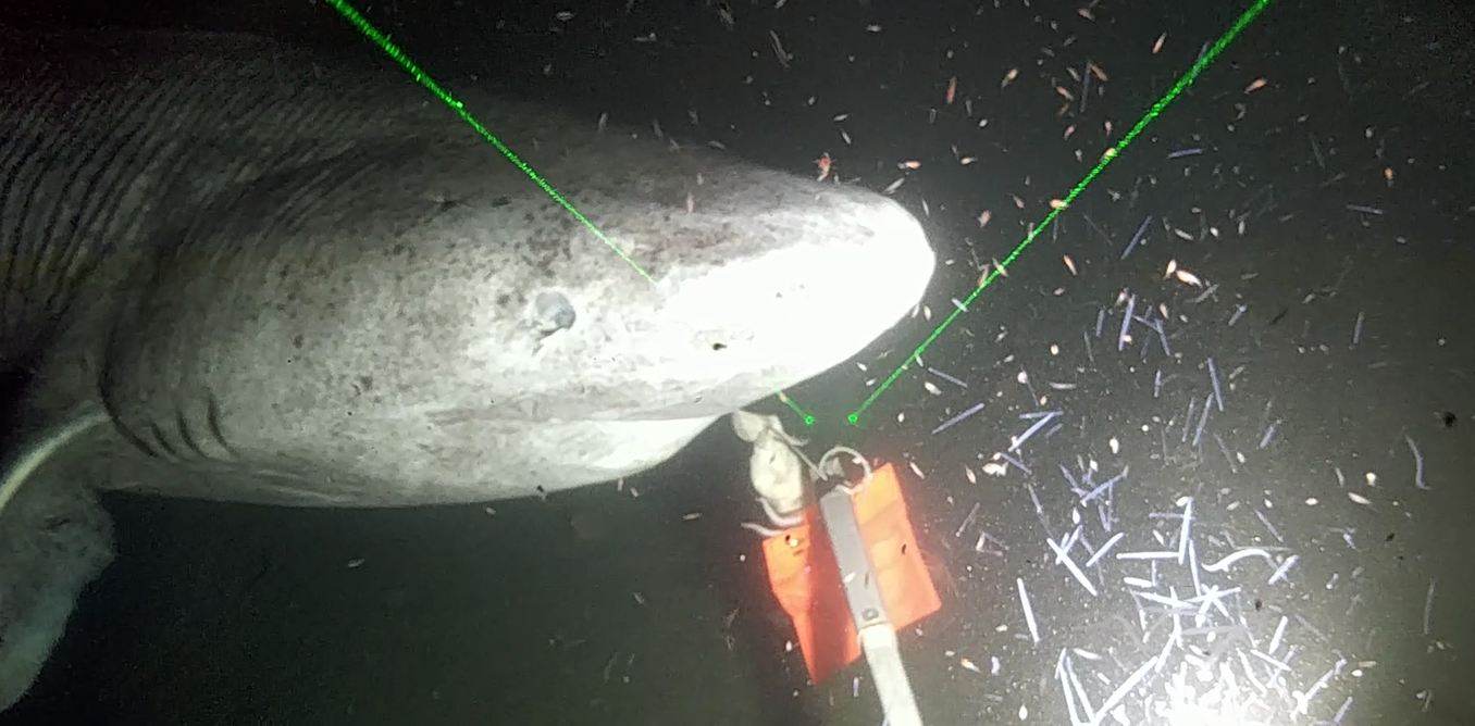 Huge sharks, tiny plankton: Exploring the changing Arctic from an icebreaker