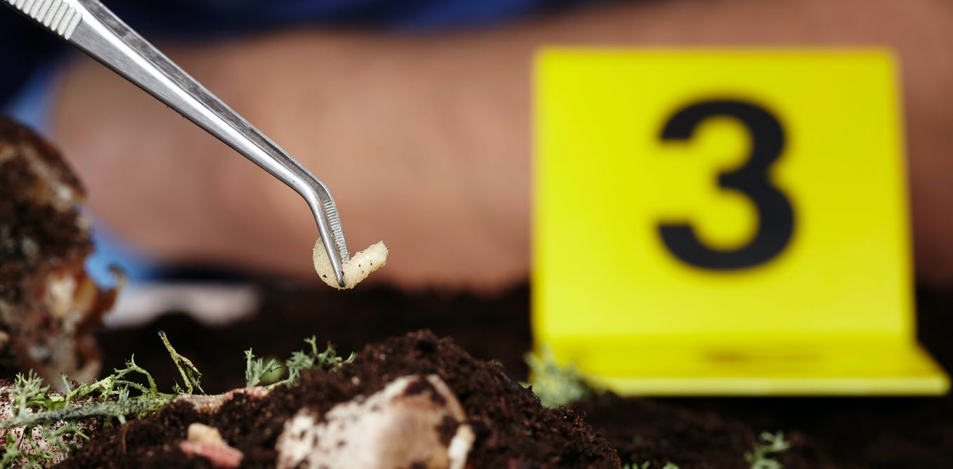 Trust Me, I'm An Expert: forensic entomology, or what bugs can tell police about when someone died