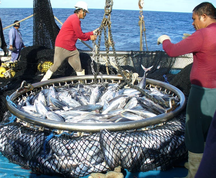 Tens of thousands of tuna-attracting devices are drifting around the Pacific
