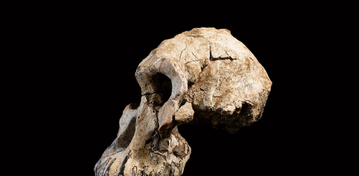 Penemuan baru tengkorak nenek moyang manusia tertua ubah pemahaman evolusi - The Conversation - ID