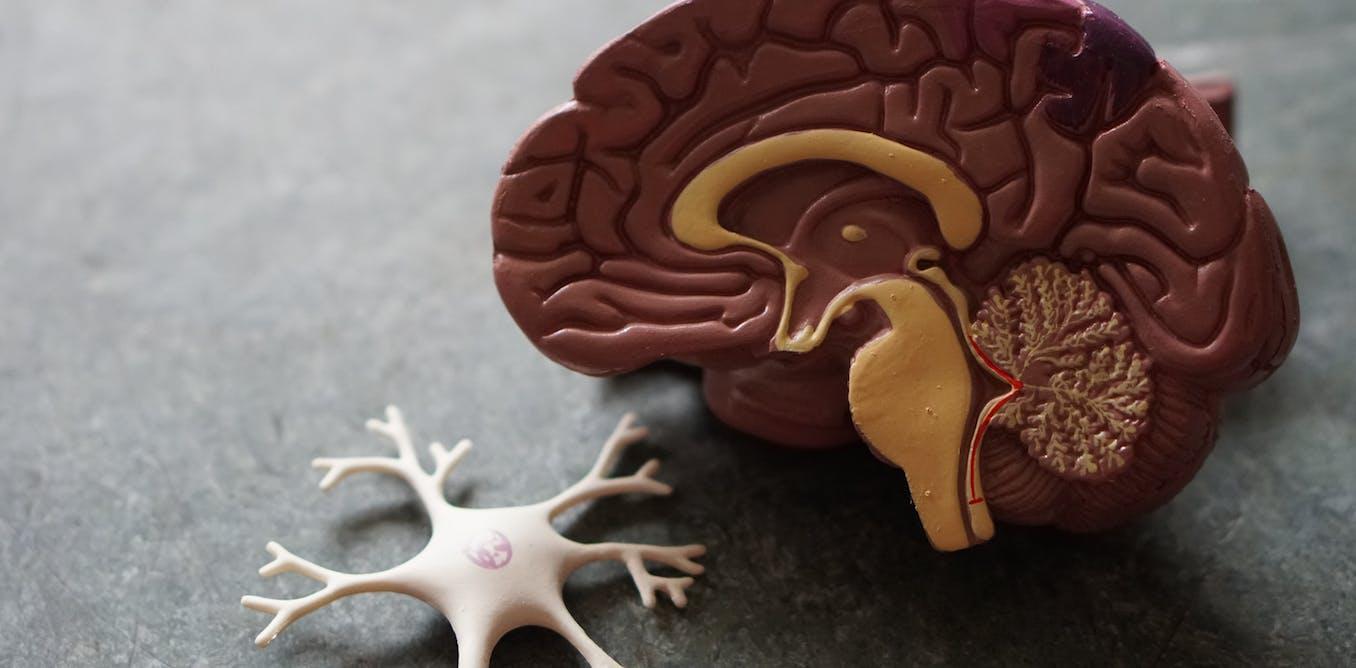 De quelles façons l'intelligence artificielle se sert-elle des neurosciences ?