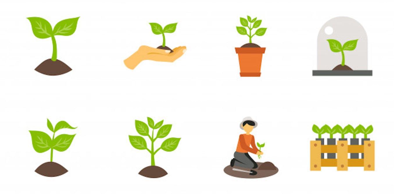Kamil, 10 ans : « À partir d'une graine : comment on obtient une plante ? »