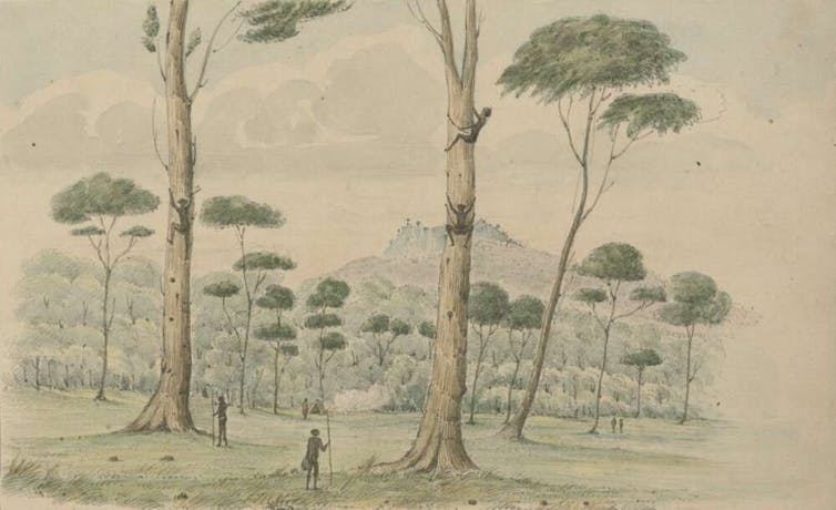 Robert Marsh Westmacott's picture depicting the 'View in the Kangaroo Valley showing the manner the Natives climb the trees for opossums and bandicoots'