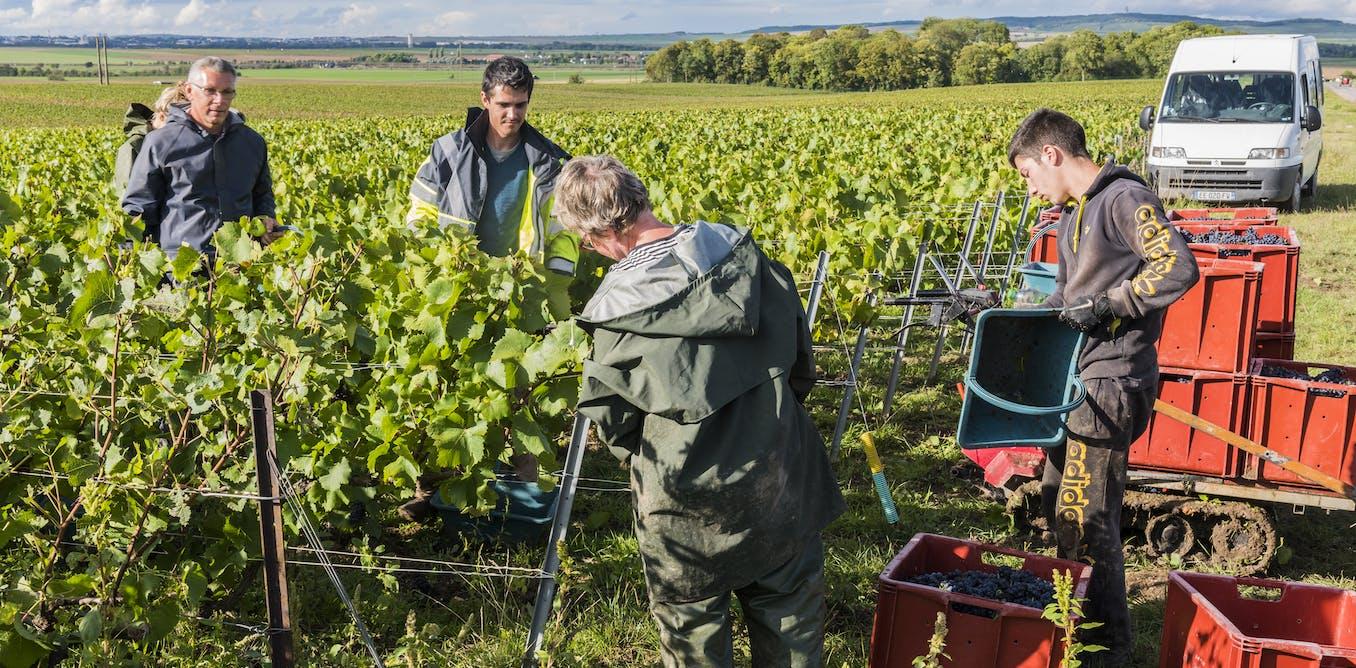 Quelques pistes (provocantes) pour sortir le vin français de la crise