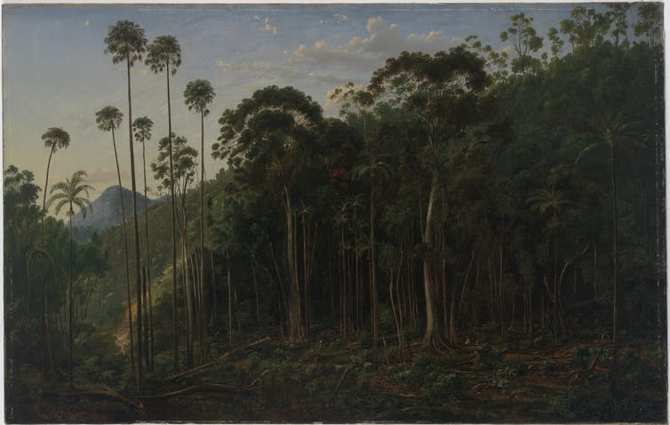 Cabbage Trees near the Shoalhaven River, 1860 painting by Eugene von Guerard