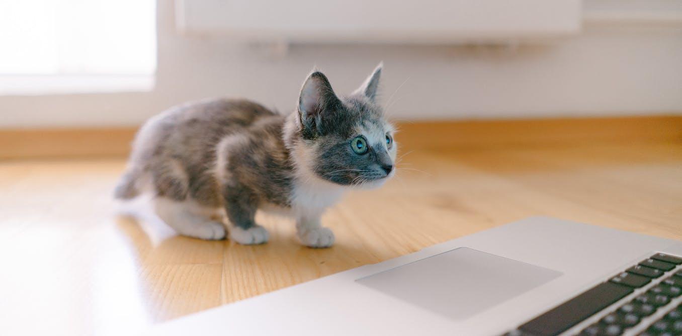 Pourquoi votre chat est nul aux échecs et pourtant plus intelligent qu'une IA