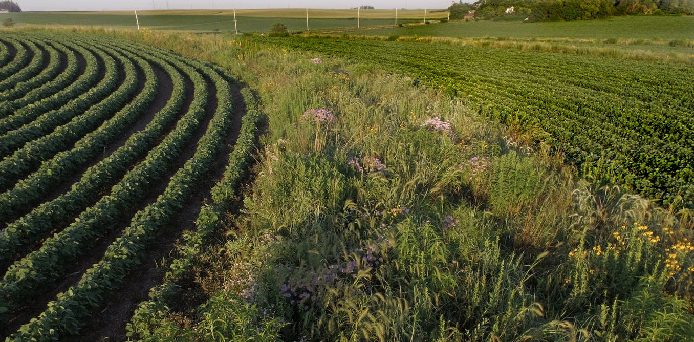 Iowa's farmers – and American eaters – need a national discussion on transforming US agriculture