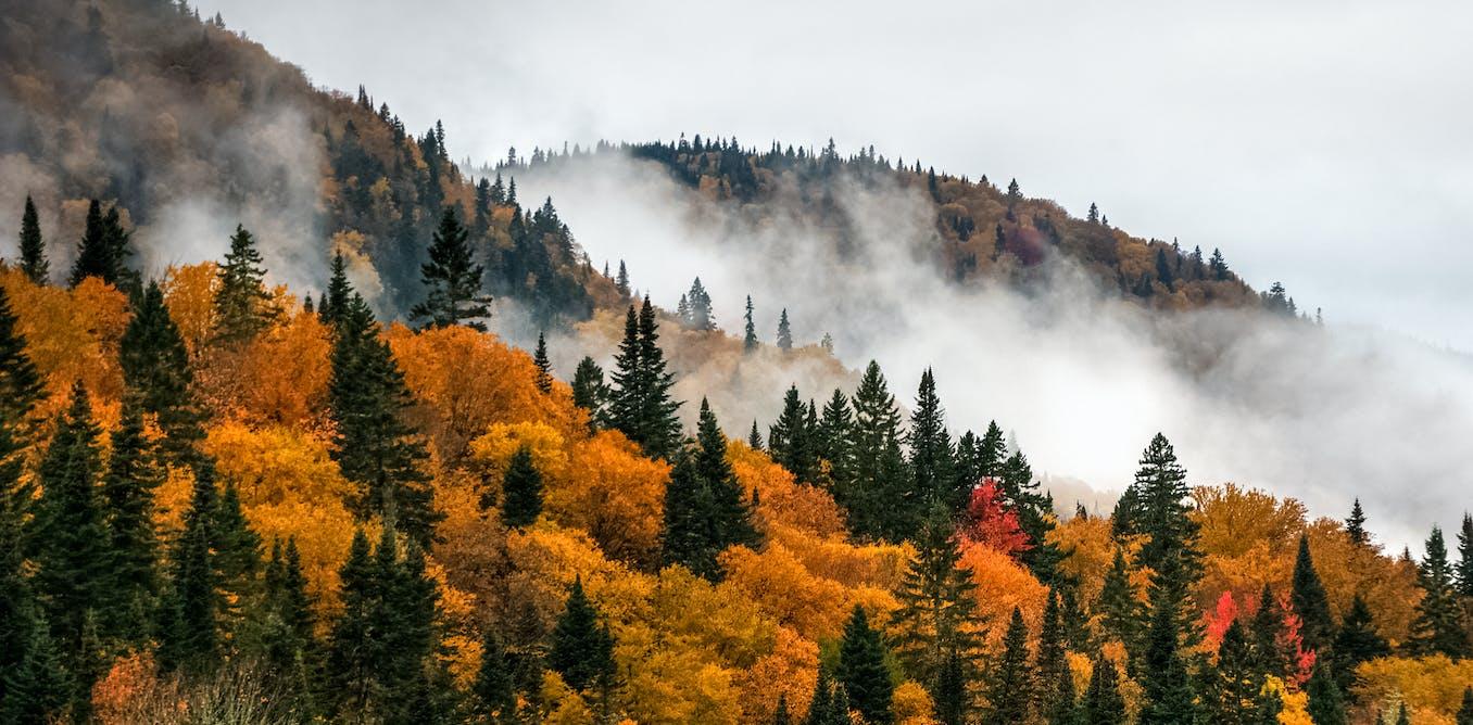 Couper plus d'arbres pour lutter contre les changements climatiques ? Oui, mais...