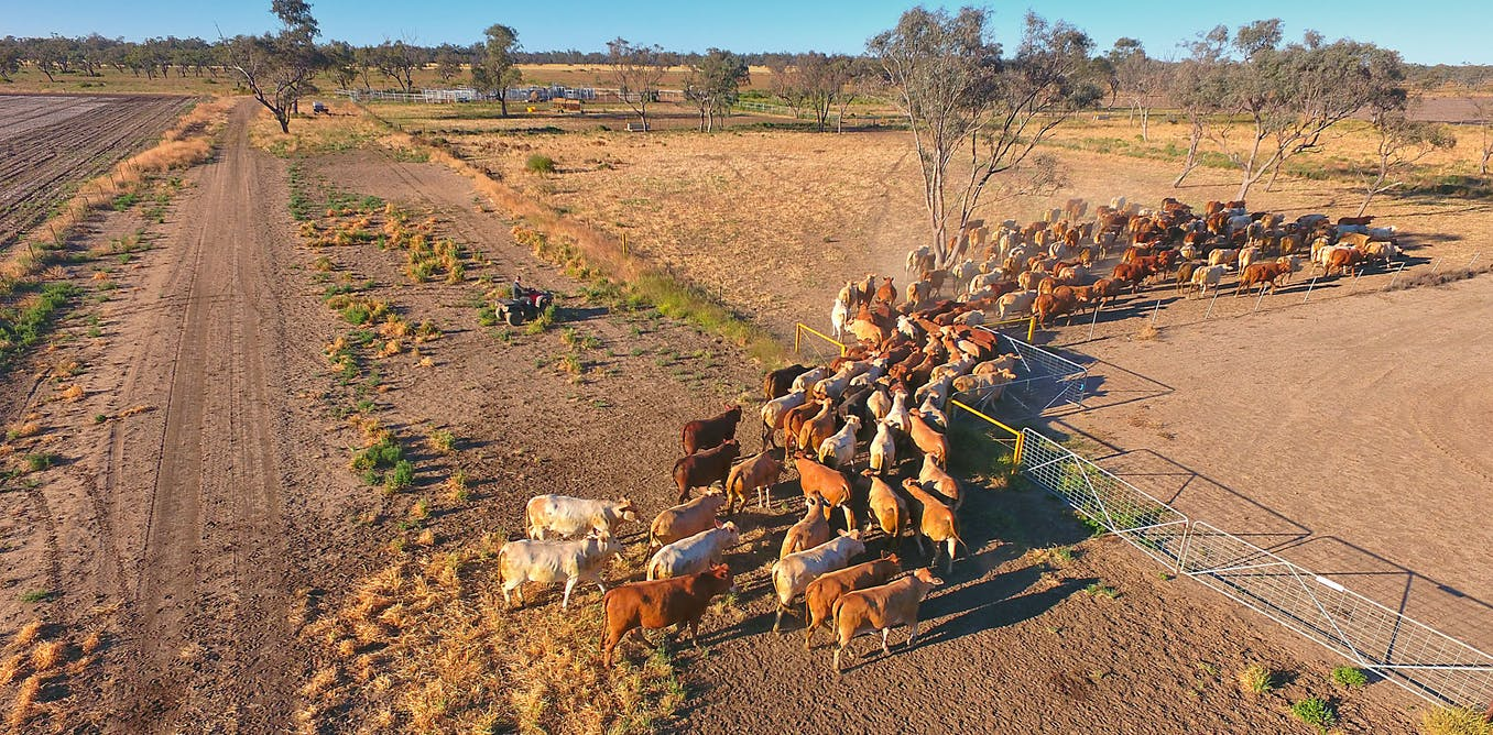 VIDEO: Michelle Grattan on the government's drought policy - and the trust divide in politics