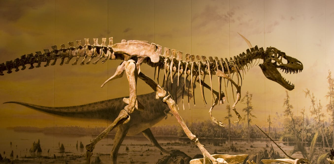 Curious Kids: how do we know if a dinosaur skeleton is from a child dinosaur or an adult dinosaur?