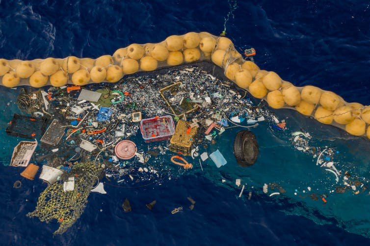 Whales and dolphins found in the Great Pacific Garbage Patch for the first time