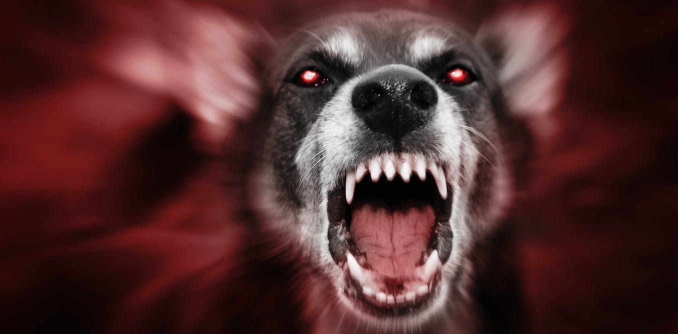 Rabies' horrifying symptoms inspired folktales of humans turned into werewolves, vampires and other monsters