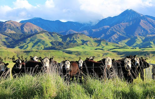 Why water quality should have been an issue when NZ government joined with farm sector to curb emissions
