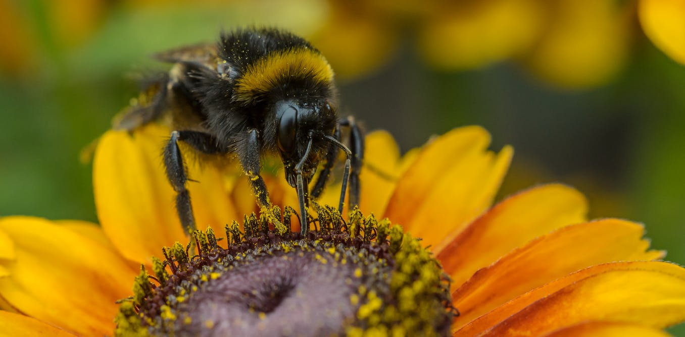Yet another widely used insecticide found to harm bees – regulators need to change their approach