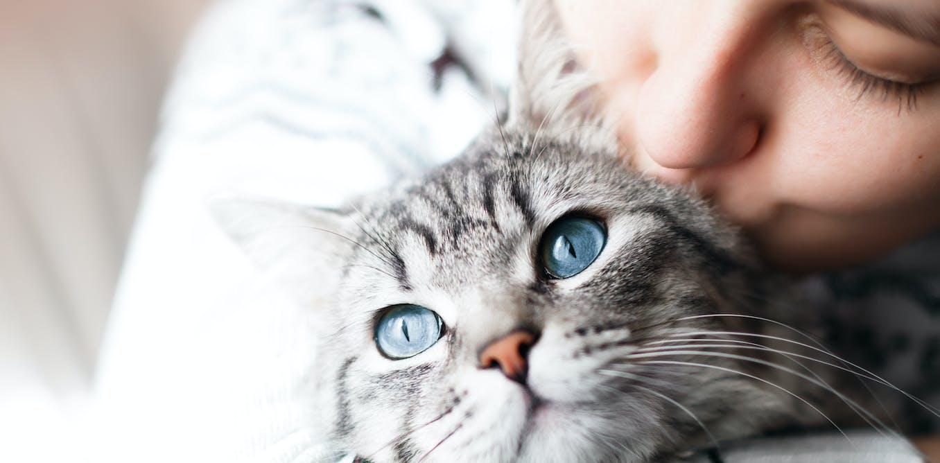 C'est prouvé : les chats nous aiment !