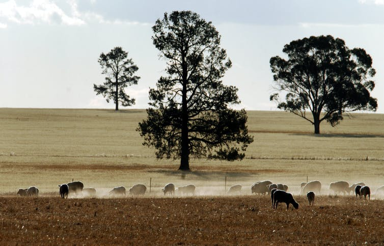 Farmers, murder and the media: getting to the bottom of the city-country divide
