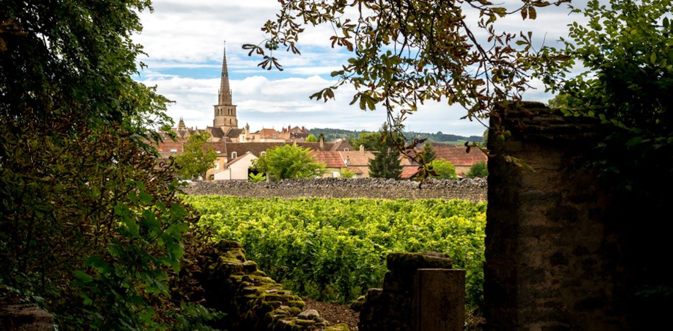 Le grand dilemme du développement de l'œnotourisme en Bourgogne