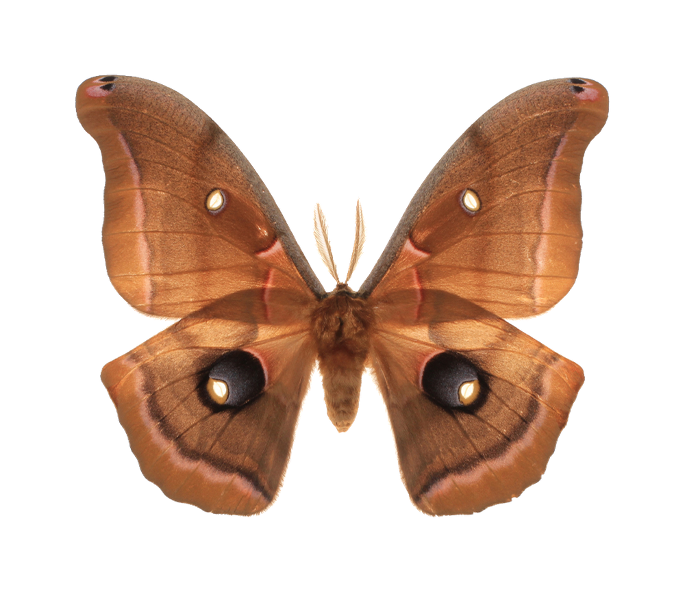 Why Are Moths Attracted To Light