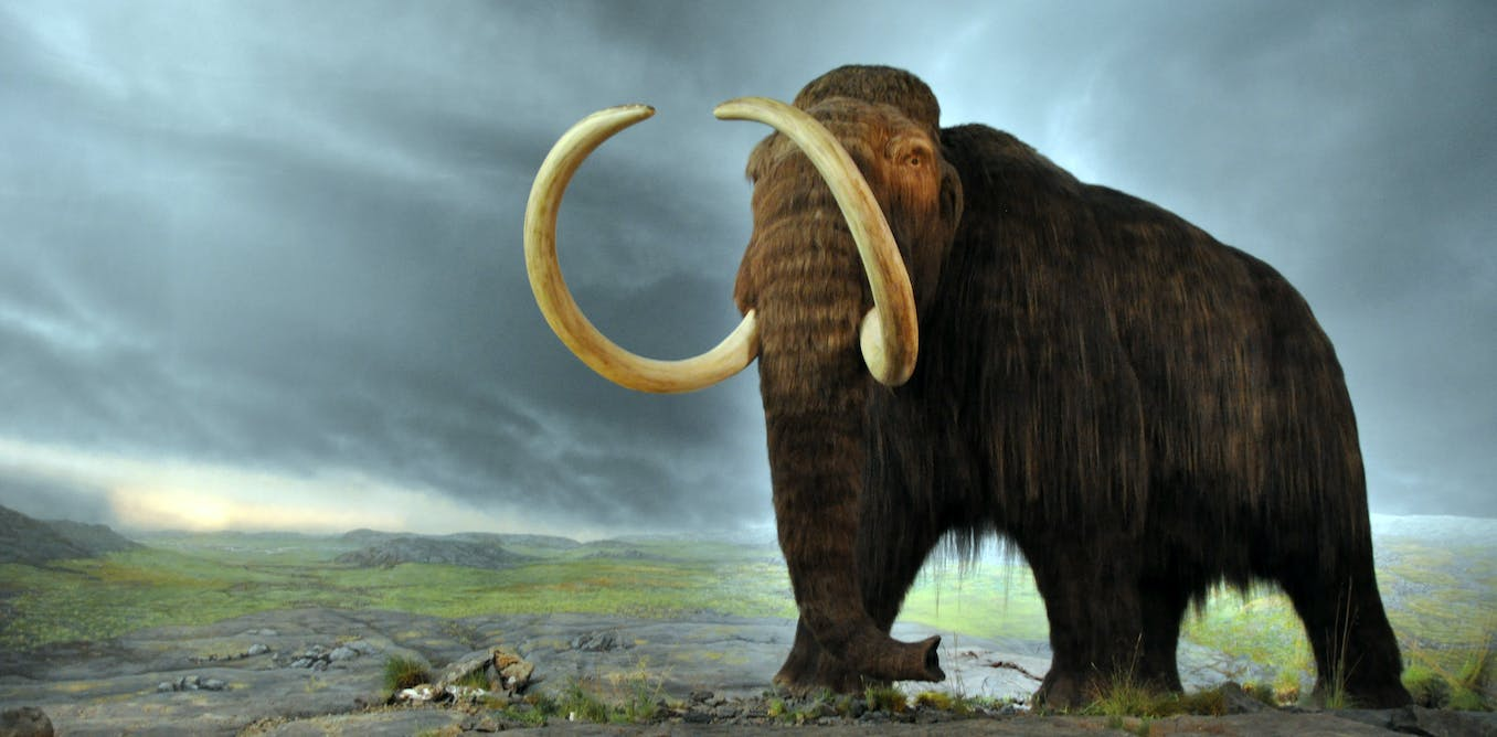 Extinction of ice age giants likely drove surviving animals apart