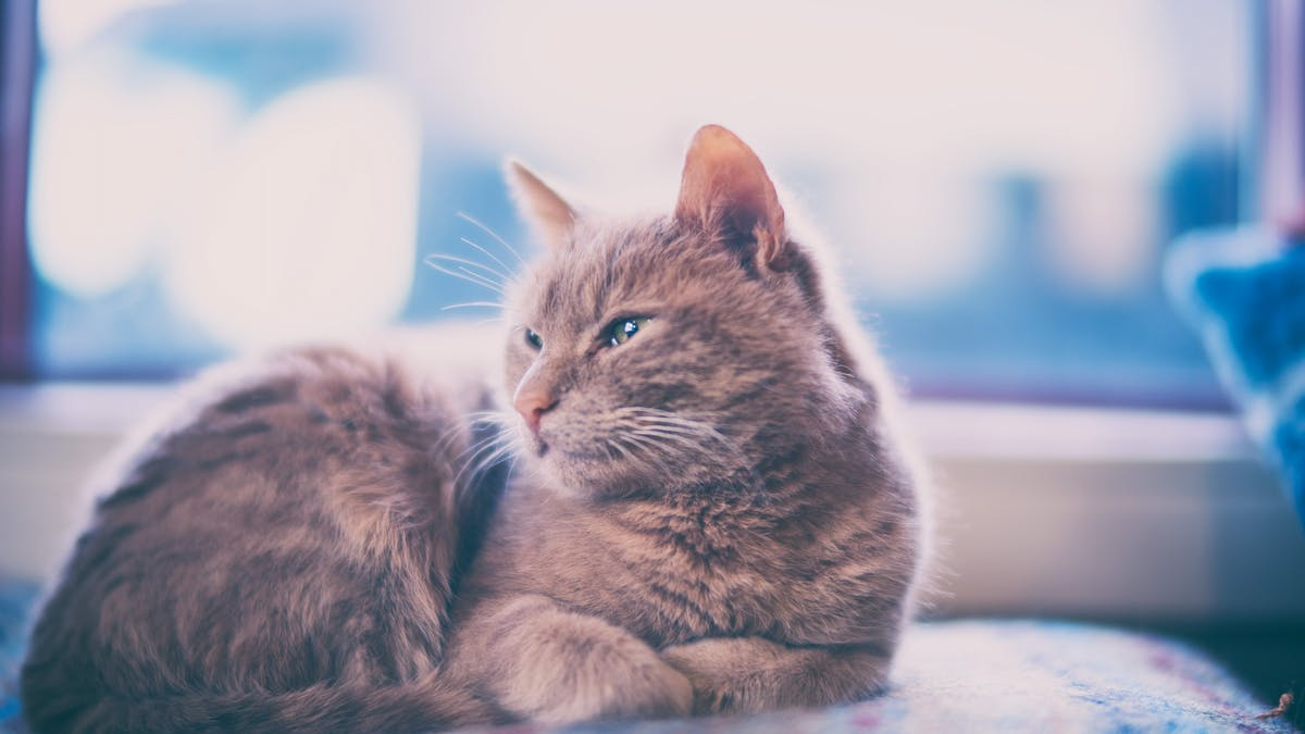 Keeping Cats Indoors How To Ensure Your Pet Is Happy According To Science