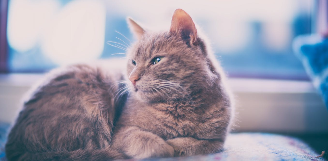 Keeping cats indoors: how to ensure your pet is happy, according to science