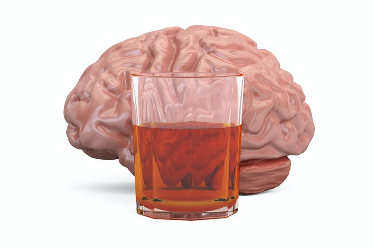 Brain activity predicts which mice will become compulsive drinkers