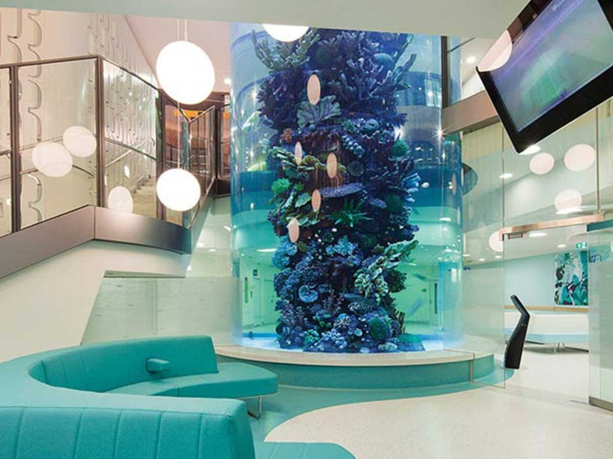 Aquariums Meerkats And Gaming Screens How Hospital Design Supports Children Young People And Their Families