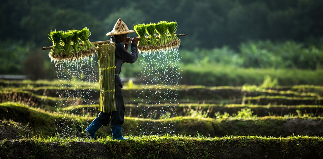 Global and historical lessons on how land reforms have unfolded