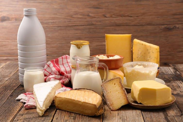 Por qué le debemos la existencia de quesos y yogures a la mosca de la fruta