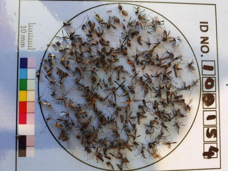As heat strikes, here's one way to help fight disease-carrying and nuisance mosquitoes