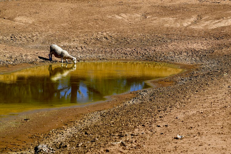The water crisis has plunged the Nats into a world of pain. But they reap what they sow